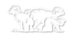 ricocrem logo pecore
